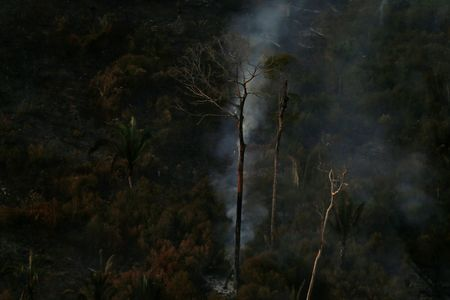 Left or right 2019 08 29t231257z 1102615492 rc16b213bca0 rtrmadp 3 brazil environment wildfires