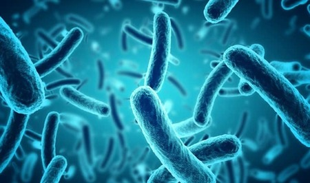 Left or right microscopic blue bacteria background picture id628978952 760x450